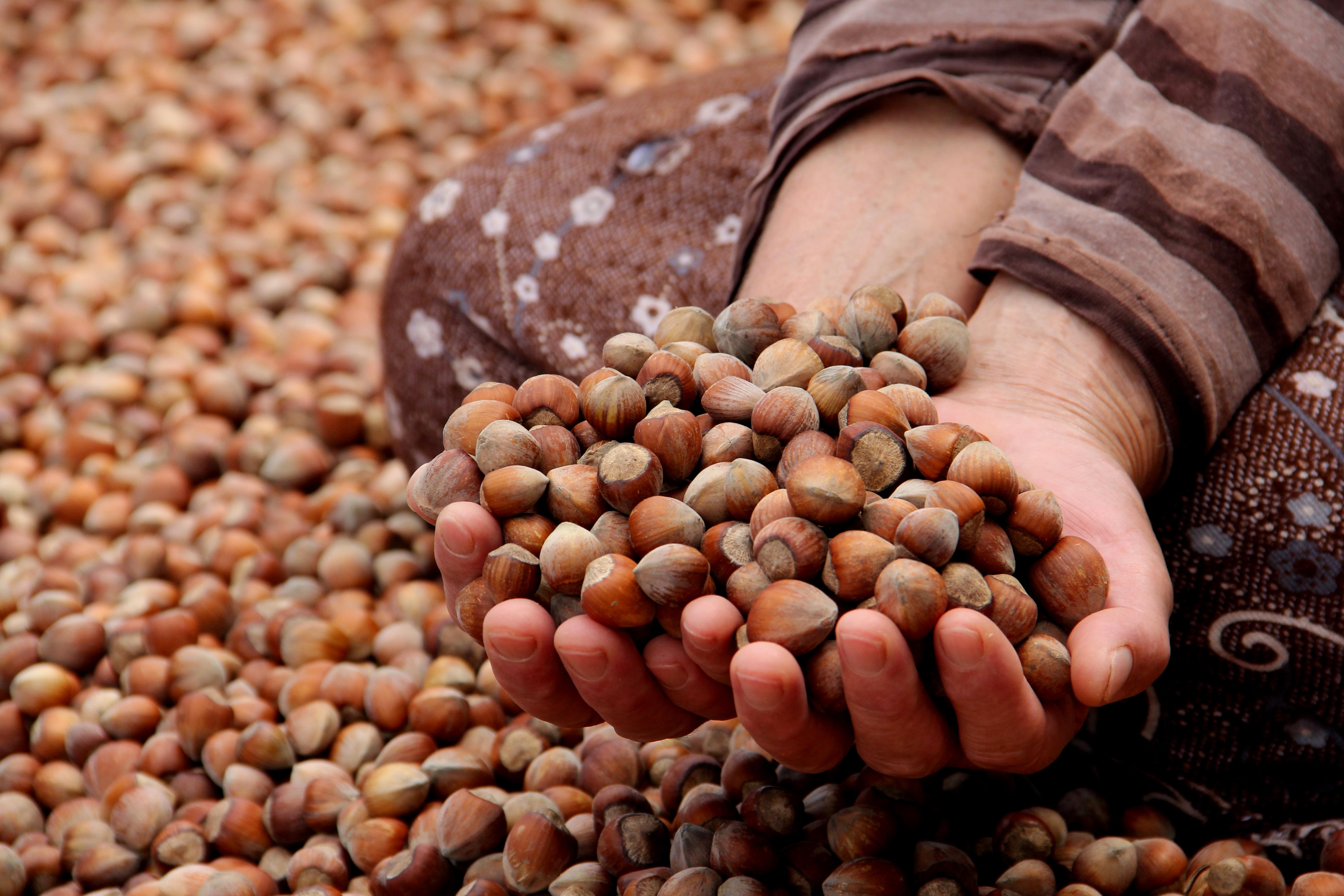 Announcement from Turkish Grain Board for Hazelnut Sales