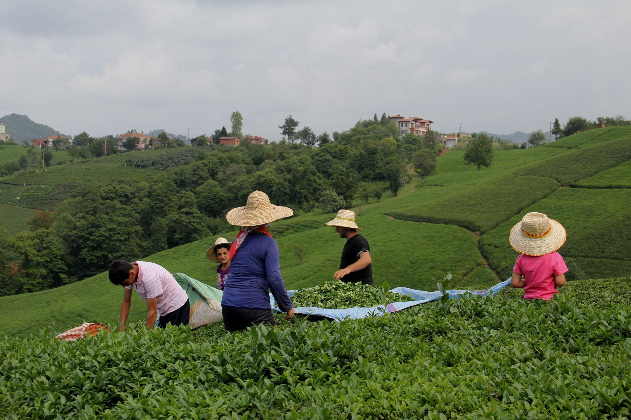 Çay fiyatı genelde olumlu bulundu