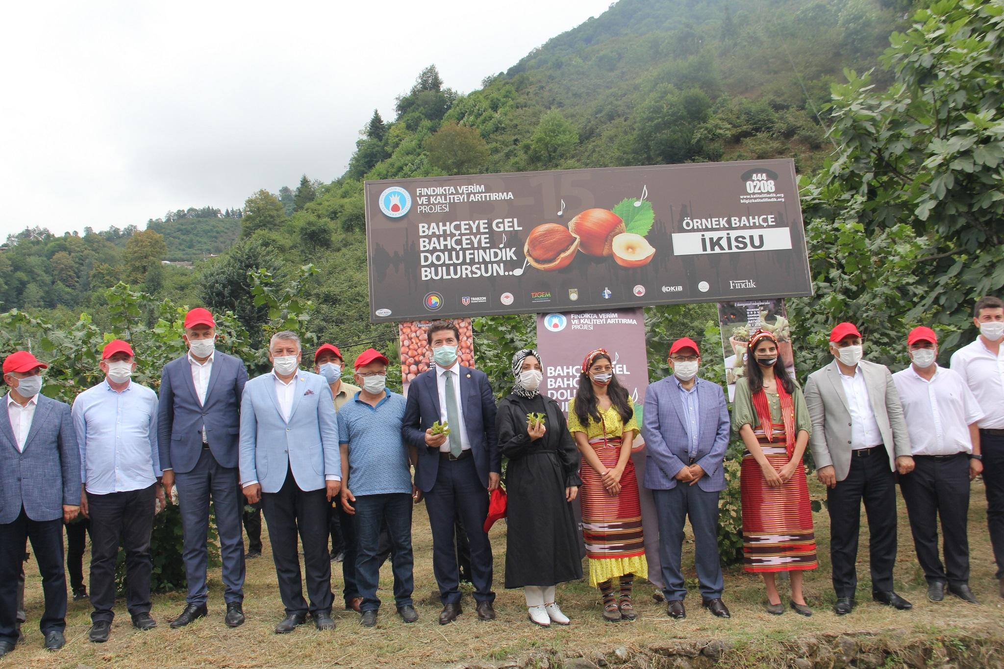 Trabzon'da örnek bahçede fındık hasadı