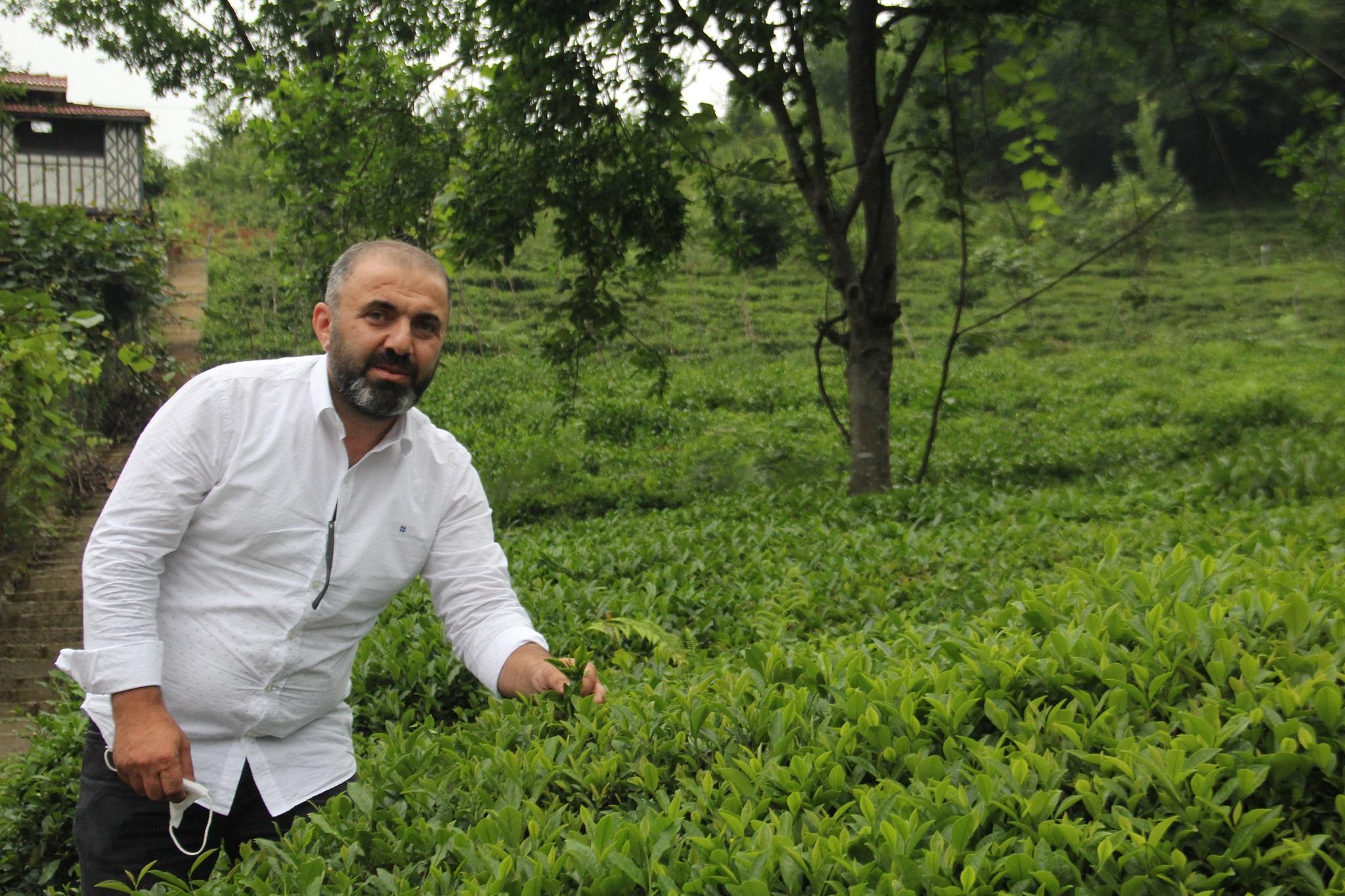 Çay da, üretici de, sanayici de sıkıntılı